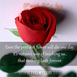 Even the prettiest flower will die one day