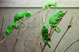 Veiled Chameleon Babies