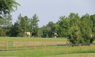 photo of horses in a pasture