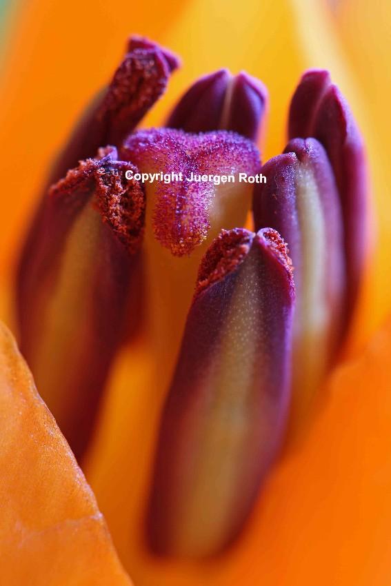 http://juergen-roth.artistwebsites.com/art/all/lilies/all?page=2