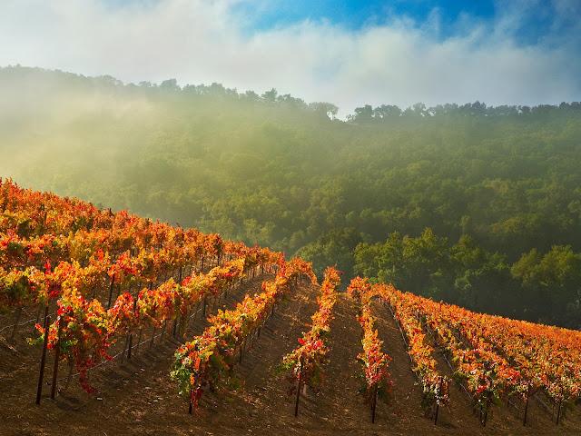 Autumn At The Vineyard1