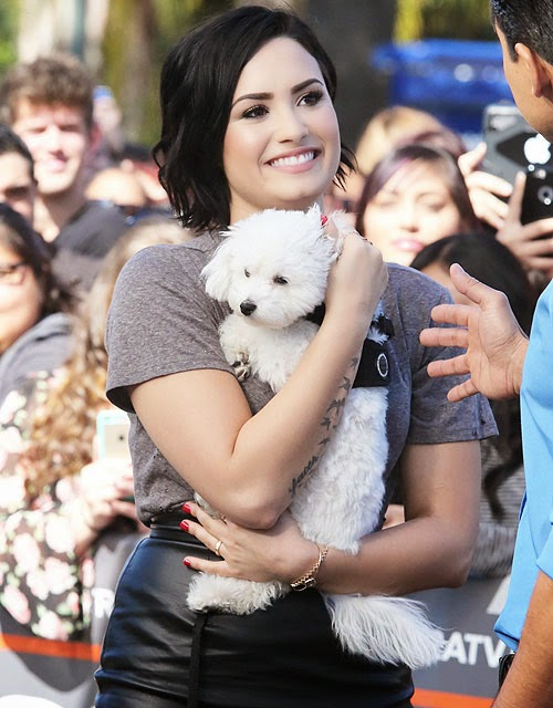 Demi Lovato Cuddles Up To Her Fuzzy brother On additional