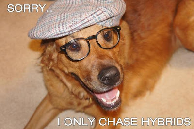 Hipster dog says, sorry, I only chase hybrids.