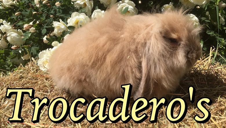 Trocadero's leijonalupat ja tanit