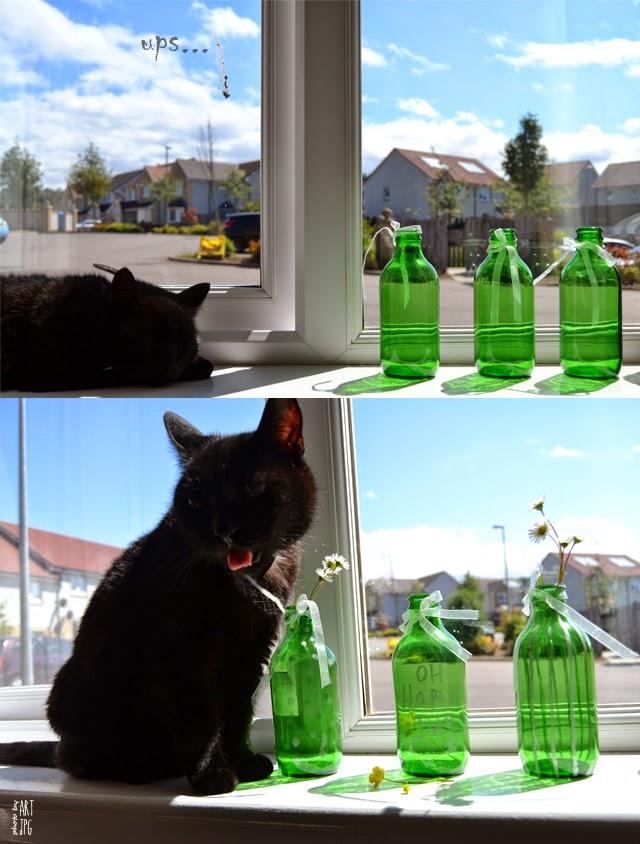 cat, bottles