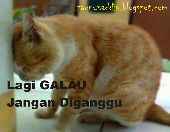 Gambar Lucu Kucing Galau Sedih Bingung