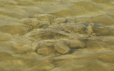 Stromatolite - Lake Thetis WA