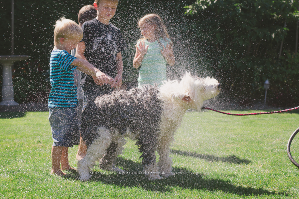 Old English Sheepgdog, Pet Photography, Kids washing Dog, Snowdowne
