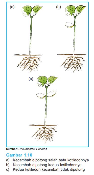 Percobaan pertumbuhan dan perkembangan