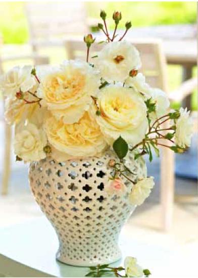vase, tabletop, rose