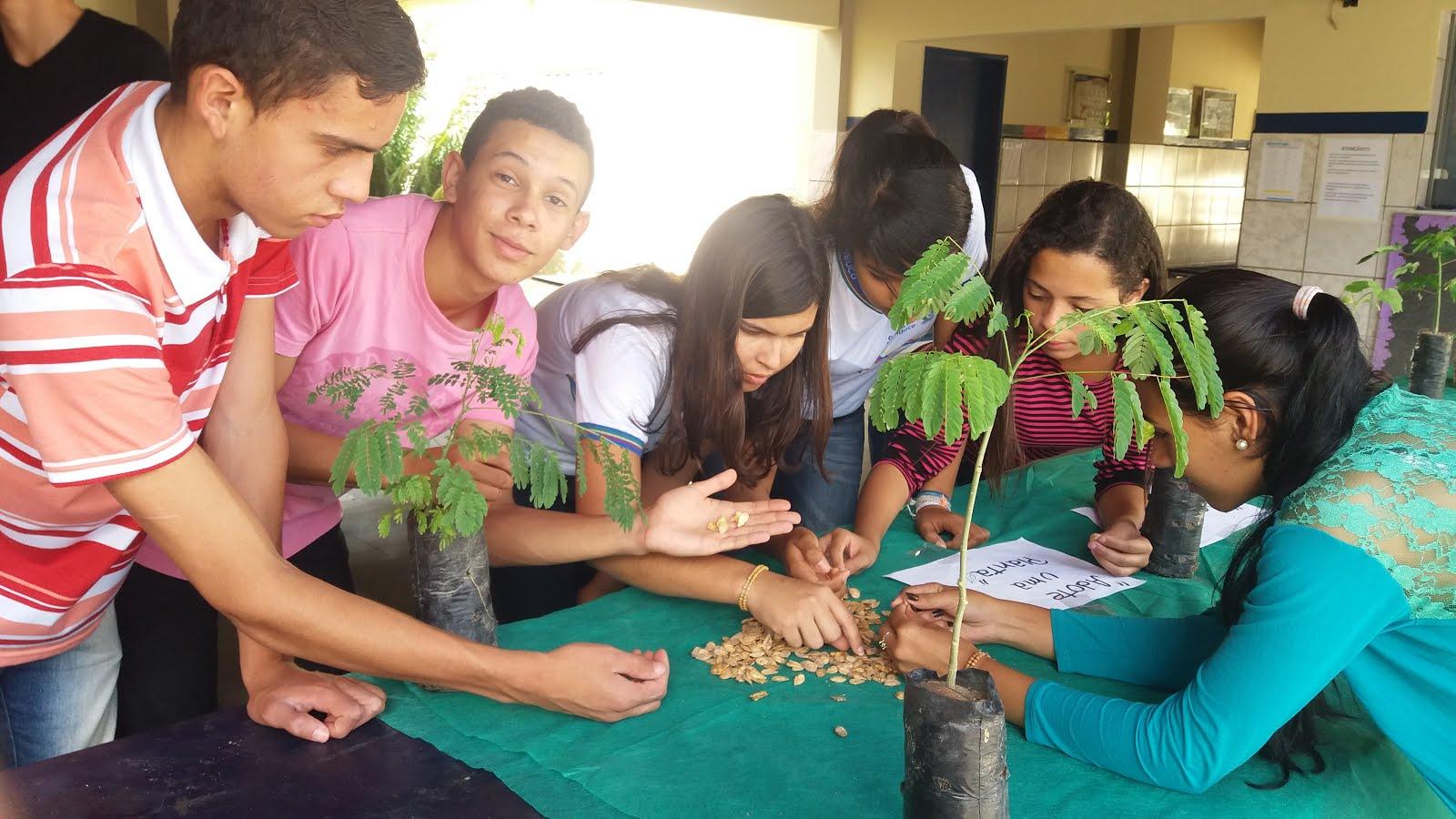 seleção de sementes de abóbora