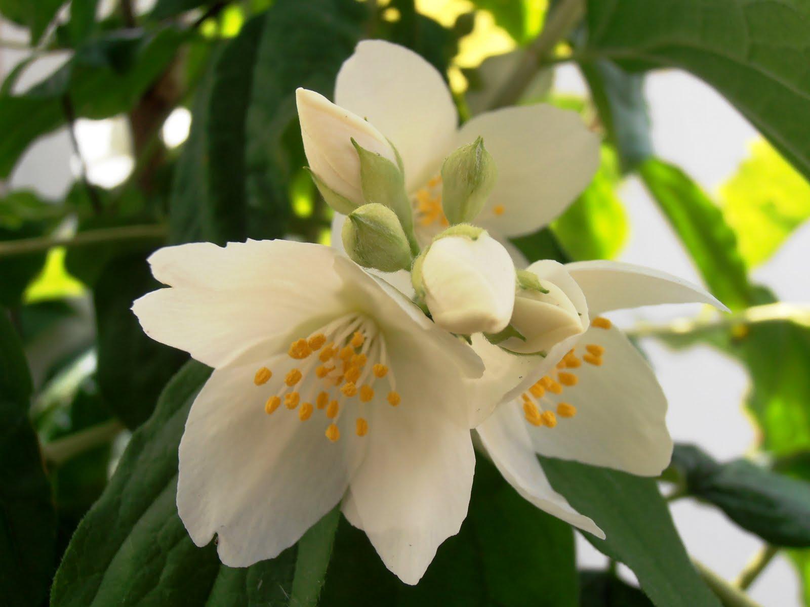 en macetas el celindo On plantas olorosas de interior