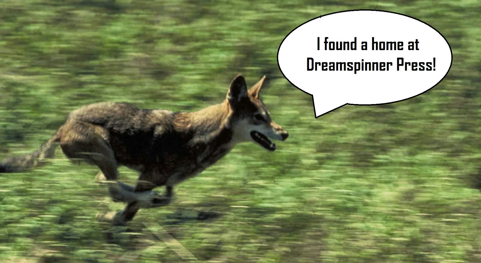 "Wolf running with caption ""I found a home at Dreamspinner Press!"""