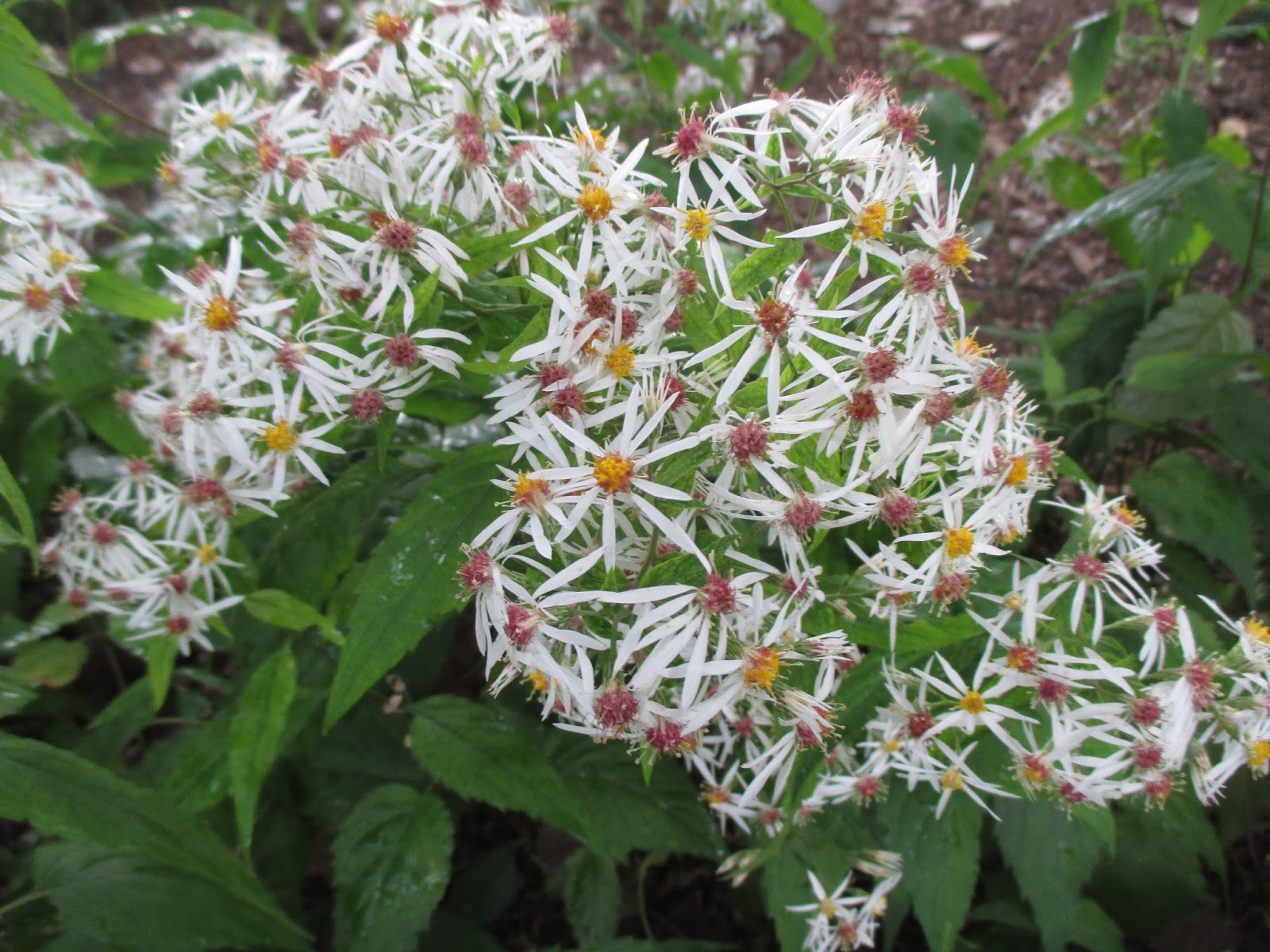 Rotary botanical gardens hort blog storms on the way for Perennial wood