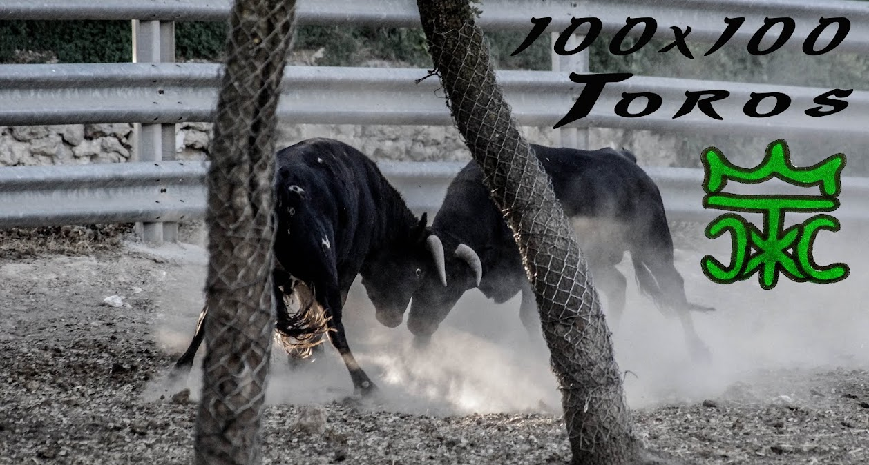 100x100 Toros