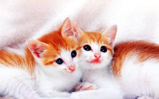 Cute Cat Couples