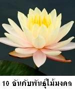 10 สุดยอดไม้มงคลที่คนไทยนิยมปลูก