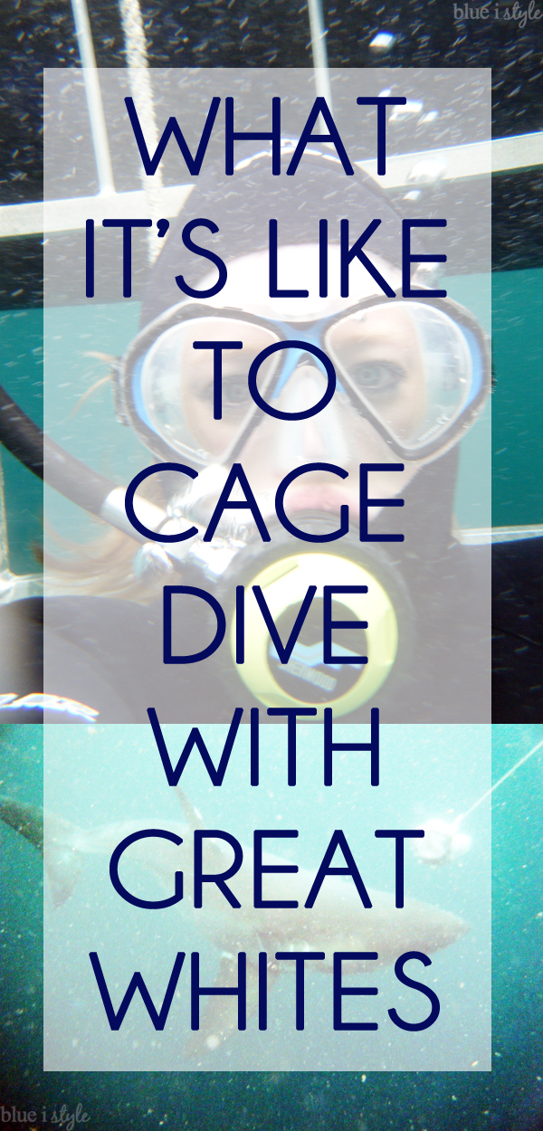 What It's Like to Cage Dive with Great White Sharks
