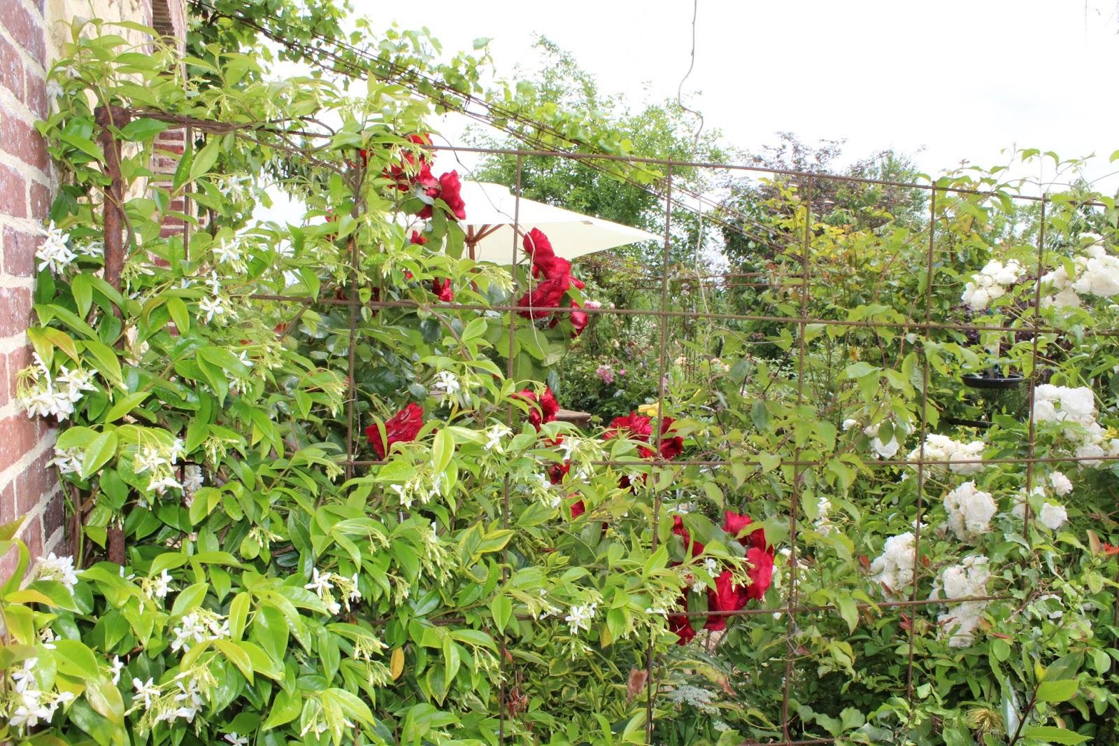 chambres d 39 h tes au jardin des violettes parfum de juin trachelospermum jasmino de. Black Bedroom Furniture Sets. Home Design Ideas