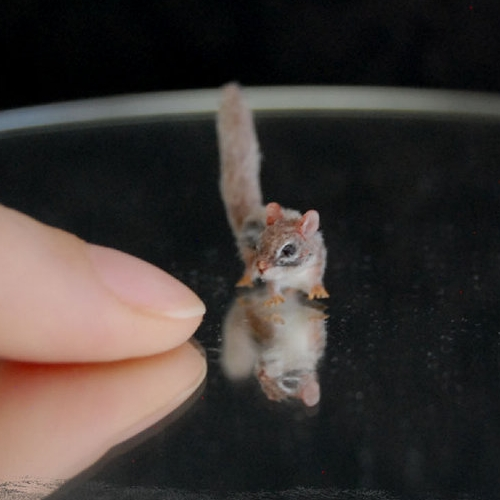 19-Chipmunk-ReveMiniatures-Miniature-Animal-Sculptures-that-fit-on-your-Hand-www-designstack-co