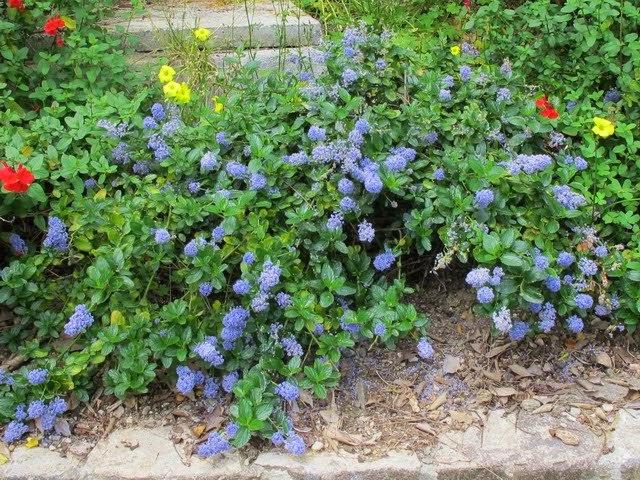 Arte y jardiner a plantas perennes tapizantes para for Plantas para rocallas