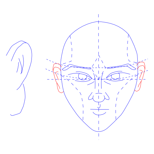 Man's Face -- Draw Ears
