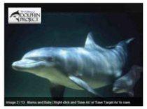 No a la masacre Delfin