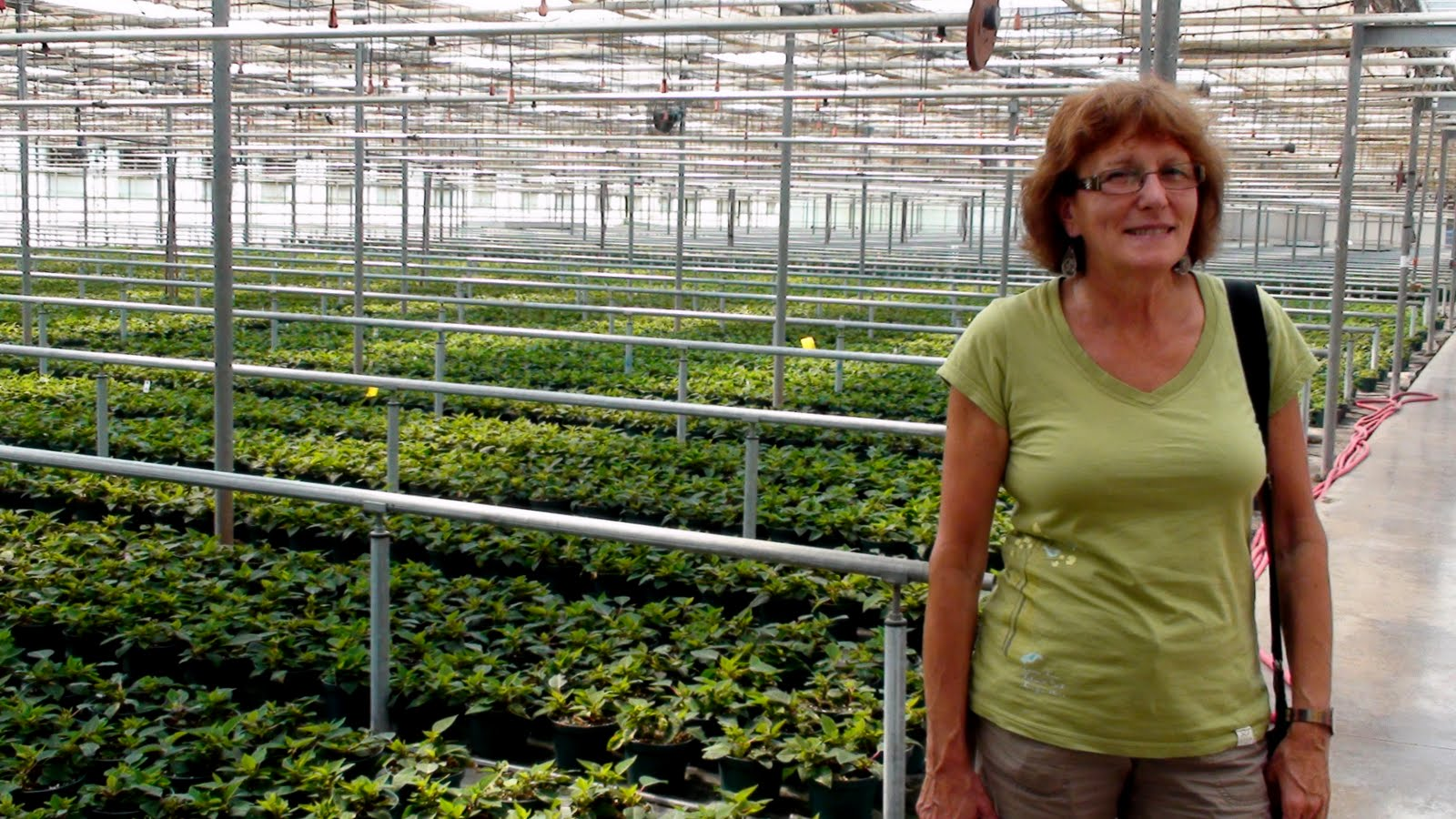 Liz amazed at all acres and acres of green houses.