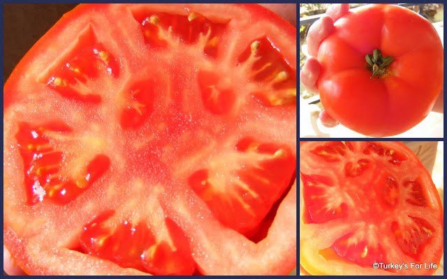 Turkish Summer Tomatoes