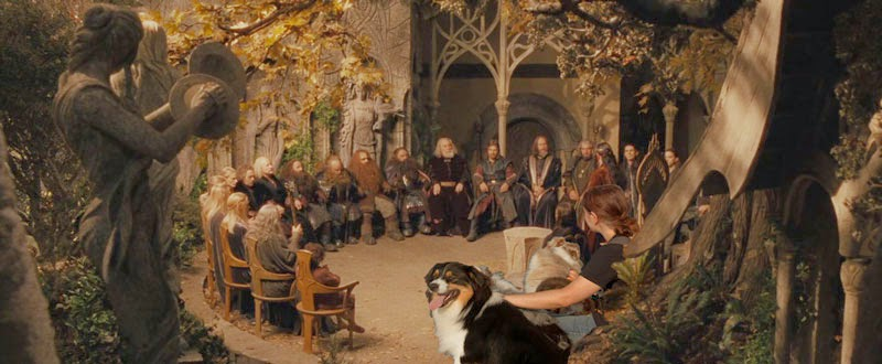 Australian Shepherd in Council of Elrond