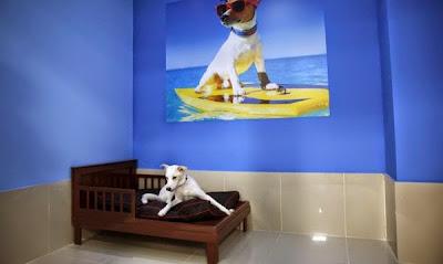 Hình ảnh một chú chó đang thưởng thức kỳ nghỉ tuyệt vời của mình.