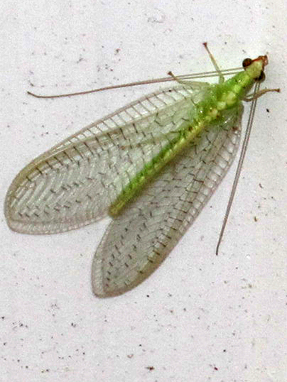 Green Flying Bugs http://mydailysnap.blogspot.com/2011_11_01_archive.html