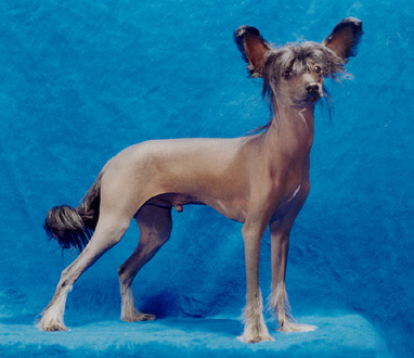 This Dog Is Really Straightforward And A Good Place To Start It Has Minimal White Its Skin Matches Hair Almost Perfectly