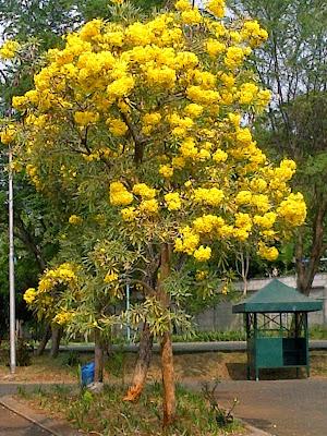 Pohon Pelindung Yang Memiliki Bunga | Jenis Pohon Bunga