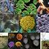 Keanekaragaman Mikroorganisme