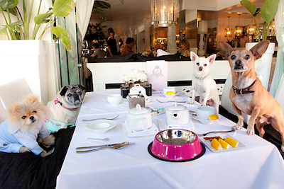 Beverly Hills Chihuahua 3 party