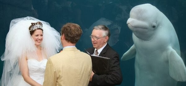 Funny animals of the week - 7 March 2014 (40 pics), beluga whale as best man