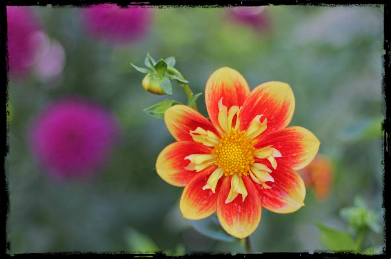 Flower at Manito Park, Spokane, Washington
