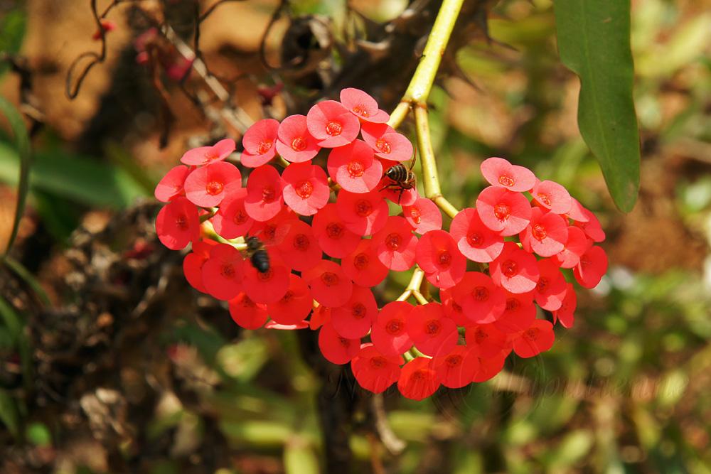 Photo Nature Lilliputienne Macrophotographies Fleurs Malgaches
