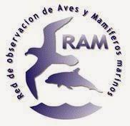 RAM (Red de Observación de Aves y Mamíferos marinos)