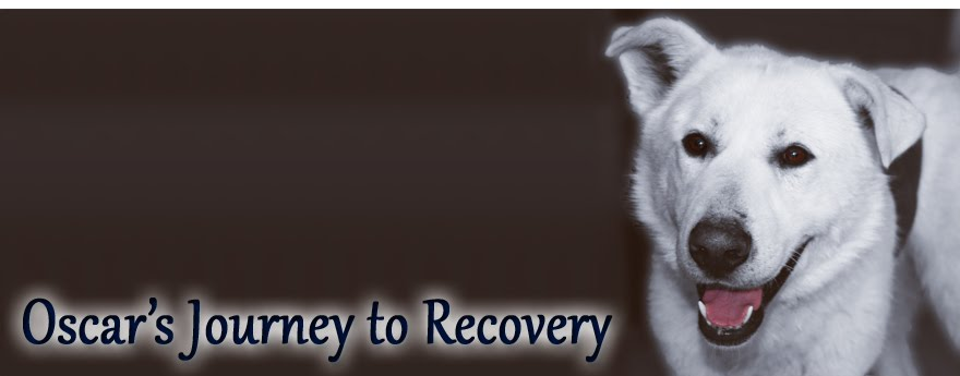 Oscar's Journey to Recovery