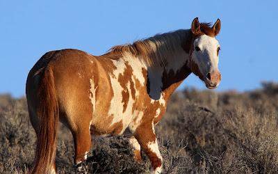 Fotografías de caballos (Equinos de Pura Sangre)