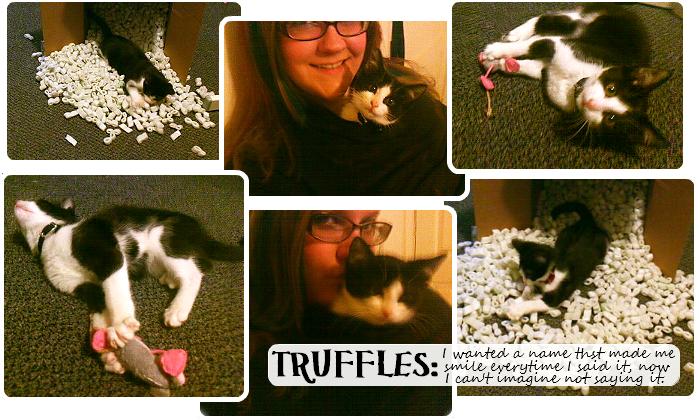 Tuxedo Kitten Truffles #GoodlifePet #Shop #Cbias