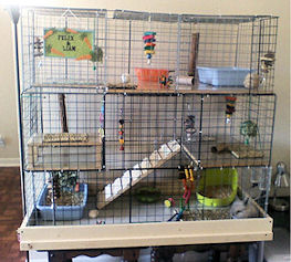 Hd animals homemade rabbit cages for Homemade bunny houses