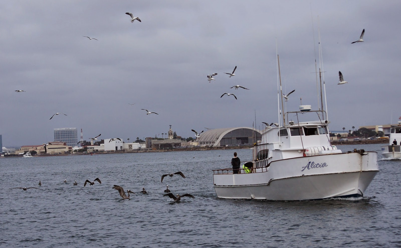 Tommy d 39 s birding expeditions deep sea birding the grande way for Point loma sport fishing