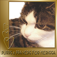 Purring for Nerissa.