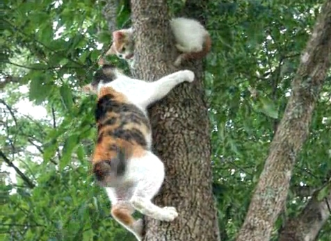 Why Do Cats Climb Trees And Get Stuck