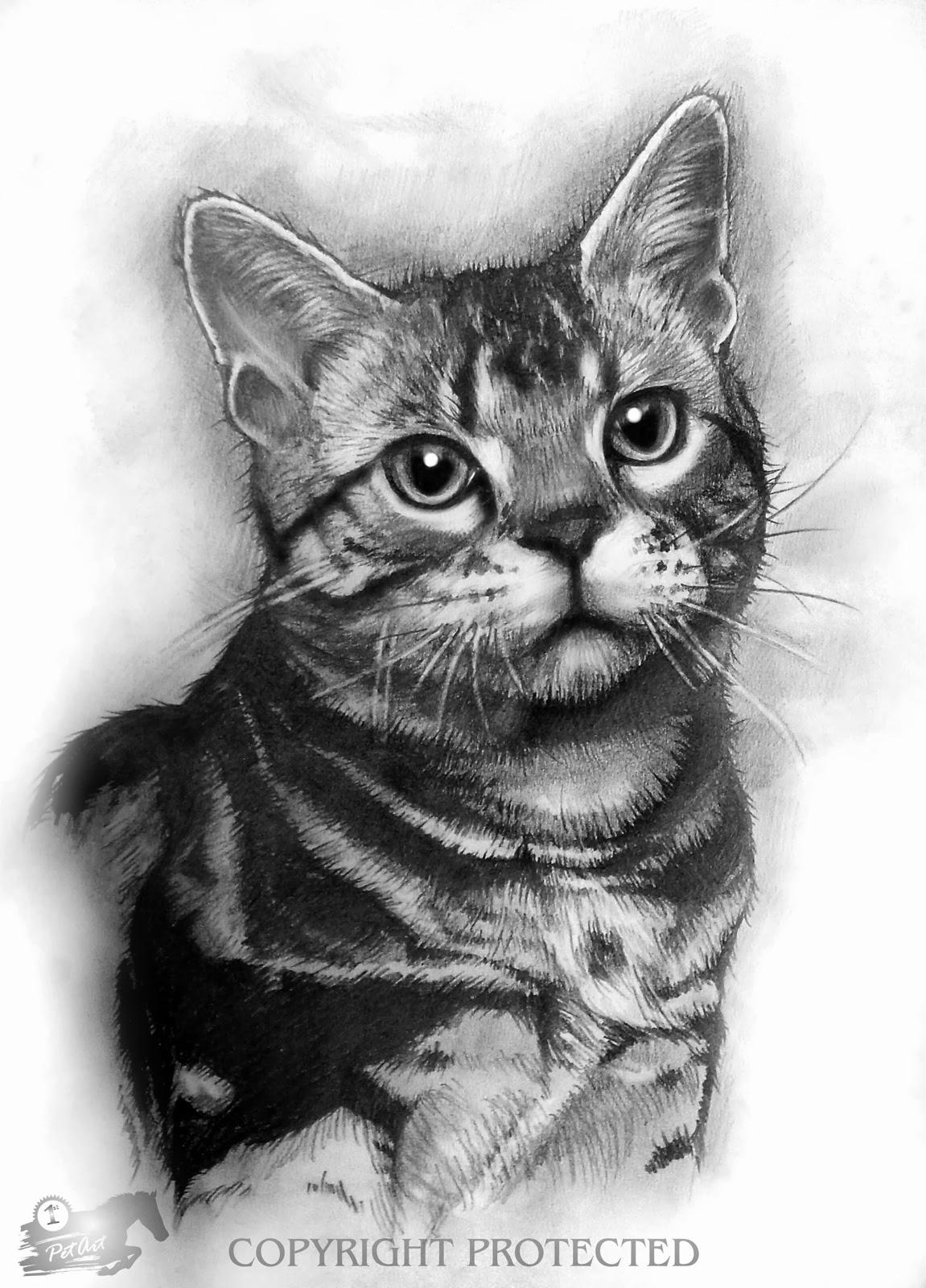 Realistic Animal Drawings: November 2013