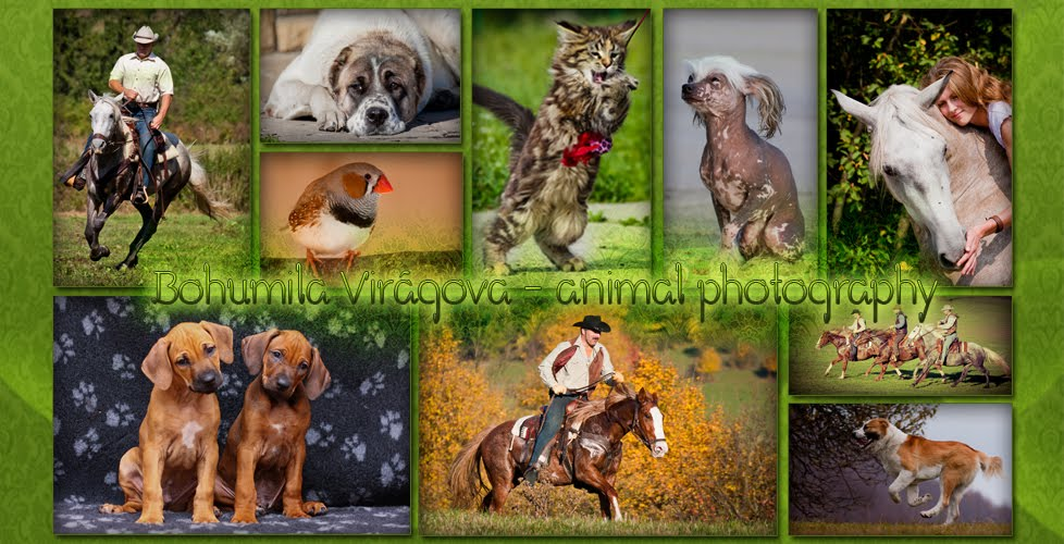 Bohumila Virágová - animal photography
