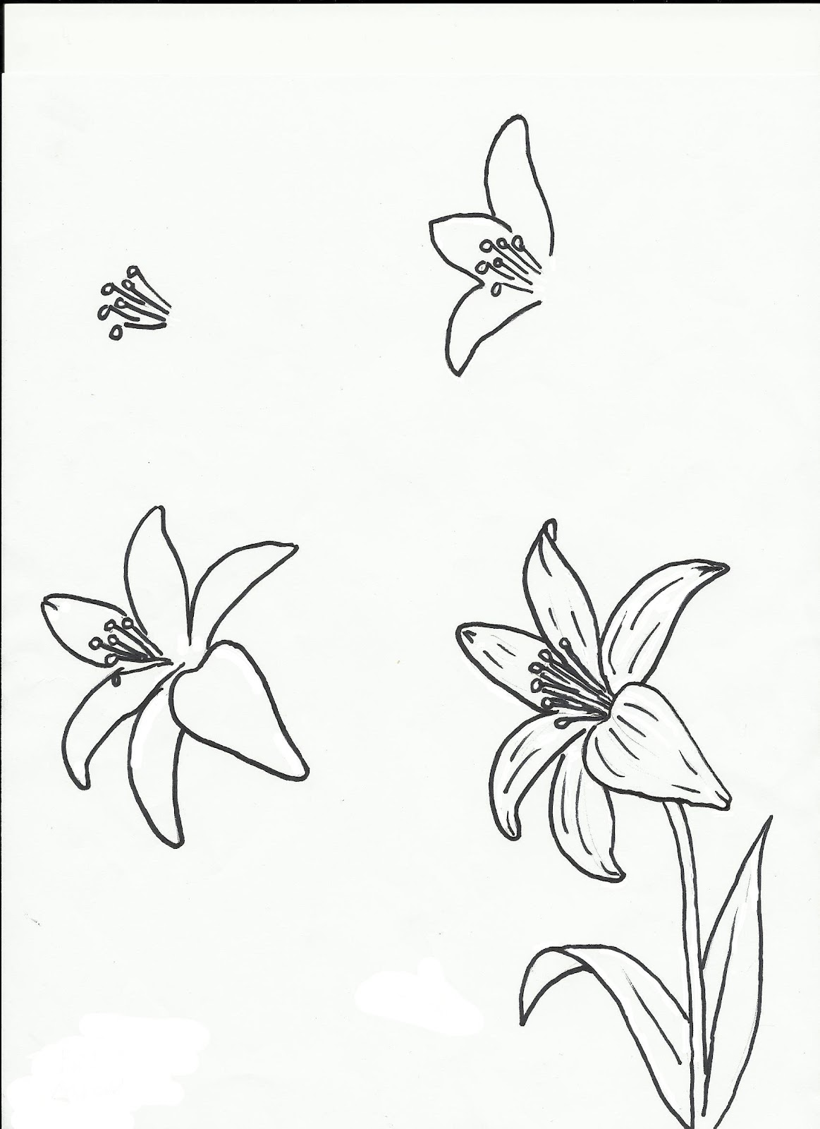 Flowers flowers flowers art class ideas lilies and calla lilies mightylinksfo